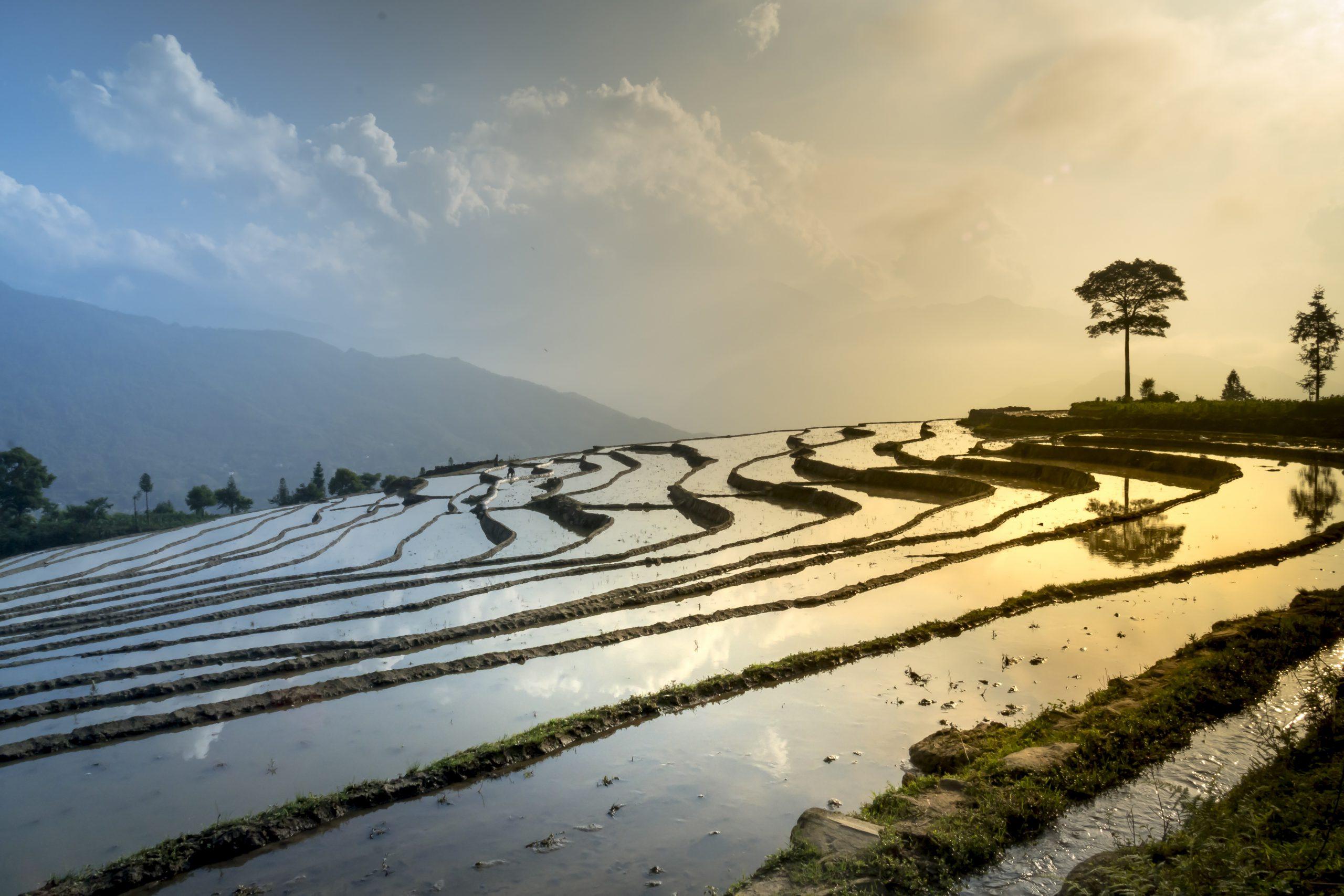 rice-field-3490060